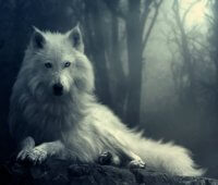 Que Come el Lobo Blanco?